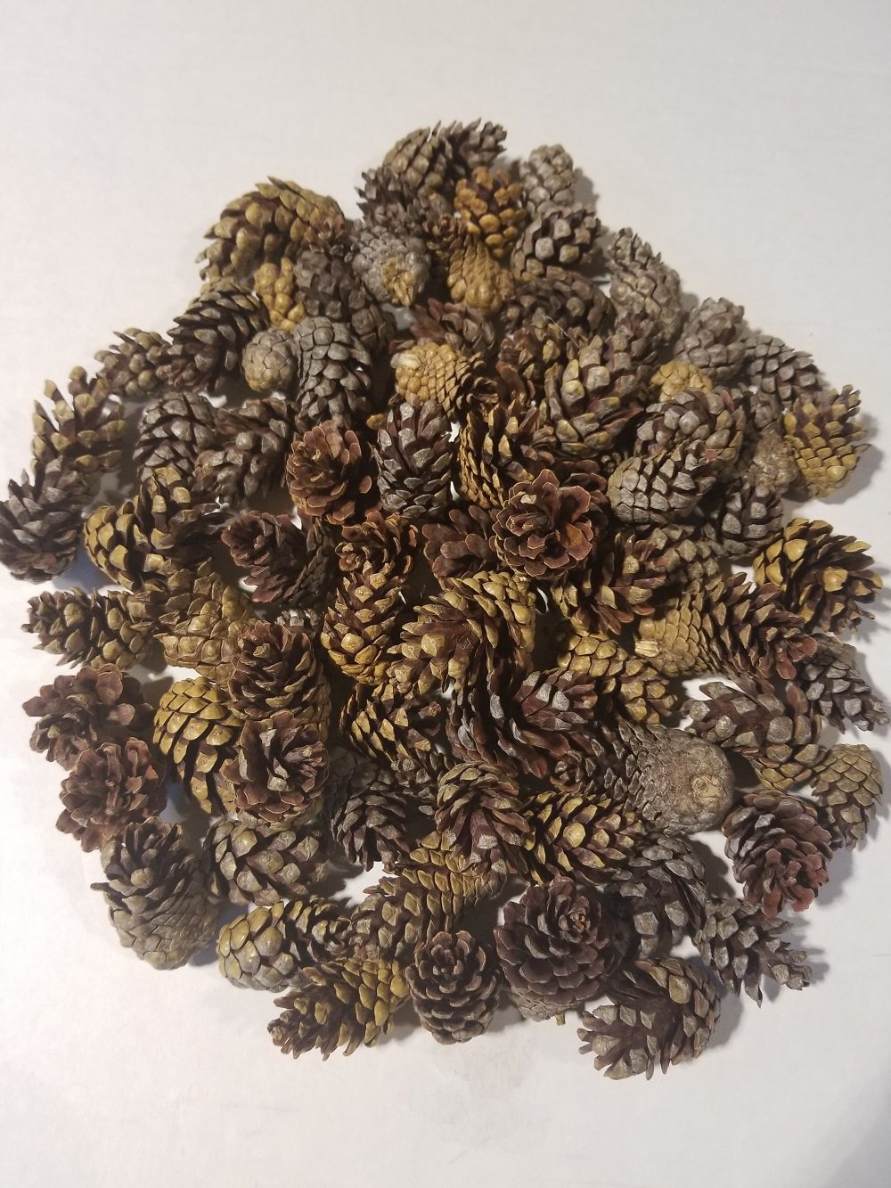 Large Bag of Weathered Small Pinecones - Perfect for Weddings or Bowl Fillers - Unscented for Decoration Or Homemade Potpourri - Made in USA