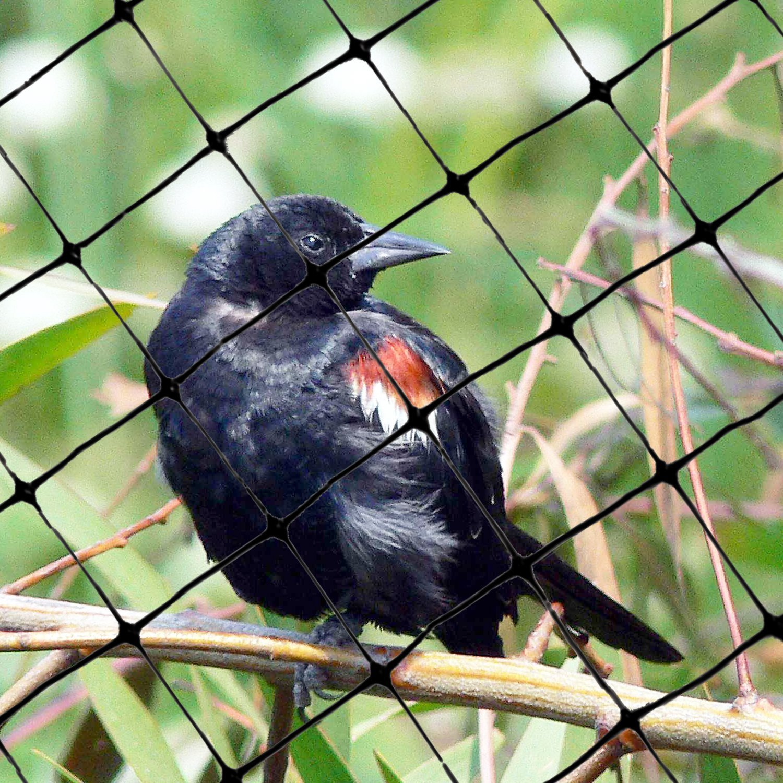 Bird-X Standard Bird Netting Ideal for Gardens and Lightweight Applications, 100' by 14' (Pack of 4)