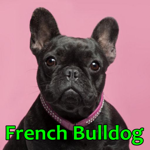 French Bulldog (Free French Bulldog compare prices)