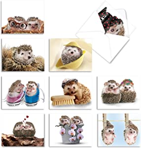 Assortment of 10 Blank Greeting Cards for Every Occasion - 'Cards from the Hedge' Hedgehog Fun Note Card (4 x 5.12 Inch) Stationery Set with White Envelopes M6541OCB