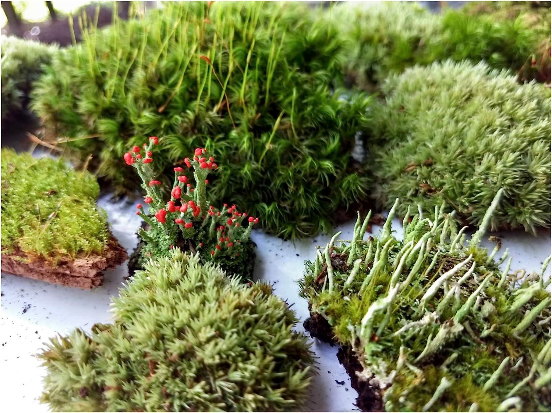 Amazon Com Tin Roof Treasure Super Fairy Garden Assortment Moss