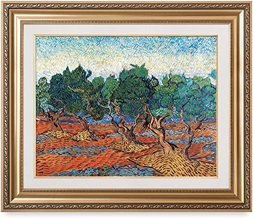 Olive Grove by Vincent Van Gogh Giclee Fine Art Print Reproduction on Canvas