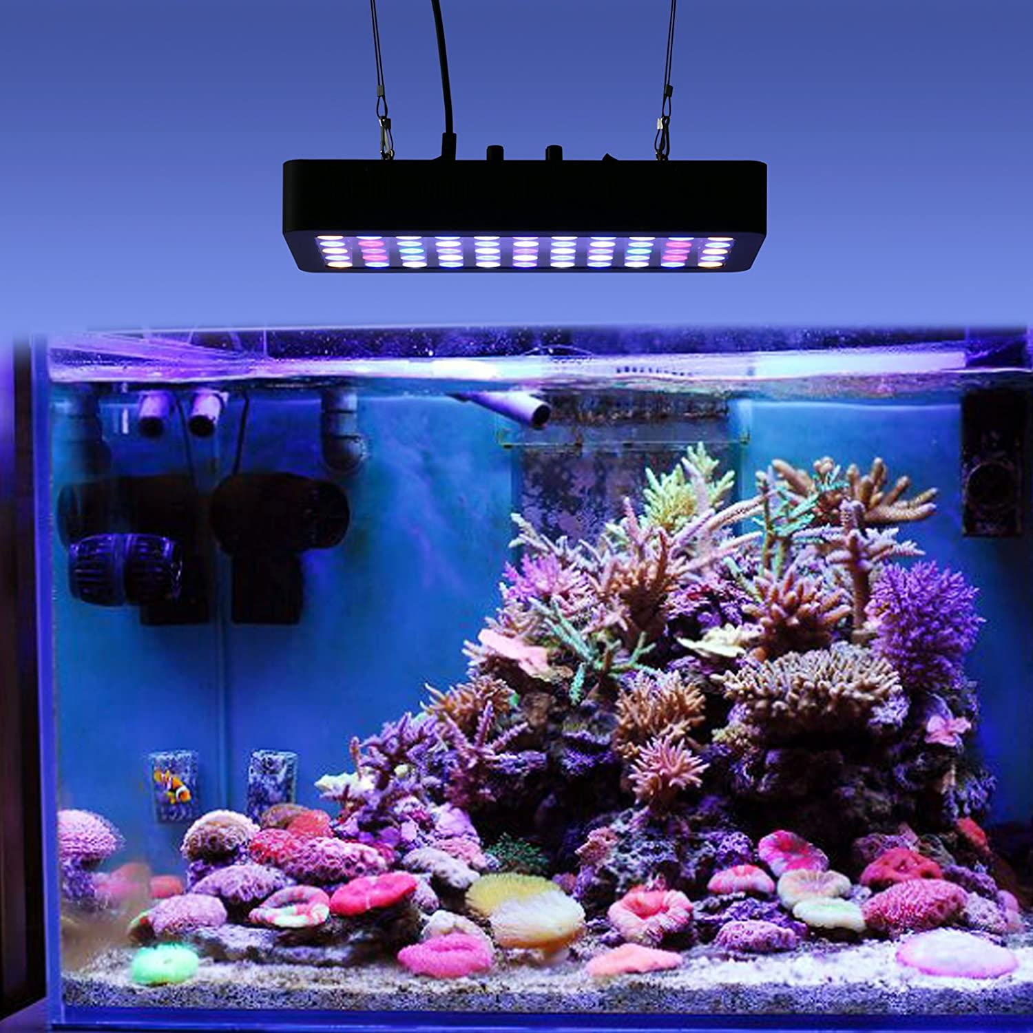 Nano led aquarium fish tank lighting - Roleadro Led Aquarium Lights Dimmable 165w Suitable For Fish Tank Lighting Aquariums Fish Reef Coral Water Plants Amazon Co Uk Kitchen Home