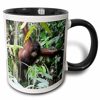 Buy 3drose 3drose Malaysia Borneo Orangutan Primate In Rainforest As23 Aas0032 Anthony Asael Two Tone Black Mug 11oz Mug 132818 4 Black White Online At Low Prices In India Amazon In