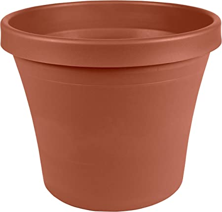 Bloem Terra Pot Planter 4.25 Terra Cotta