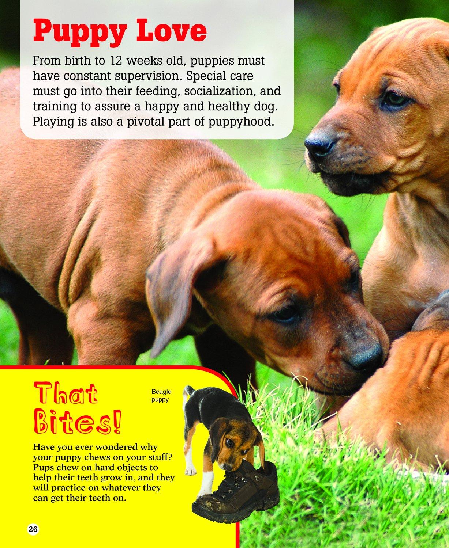 Dogs Photo Fact Collection Kidsbooks Staff Amazon - 26 dogs puppyhood photos