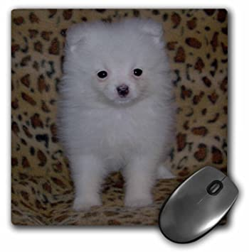 White Pomeranian Puppy - Mouse Pad, 8 by 8 inches