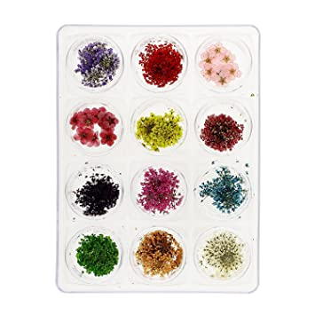 Amazon mash nail art real dried flower kit set nail art mash nail art real dried flower kit set prinsesfo Gallery