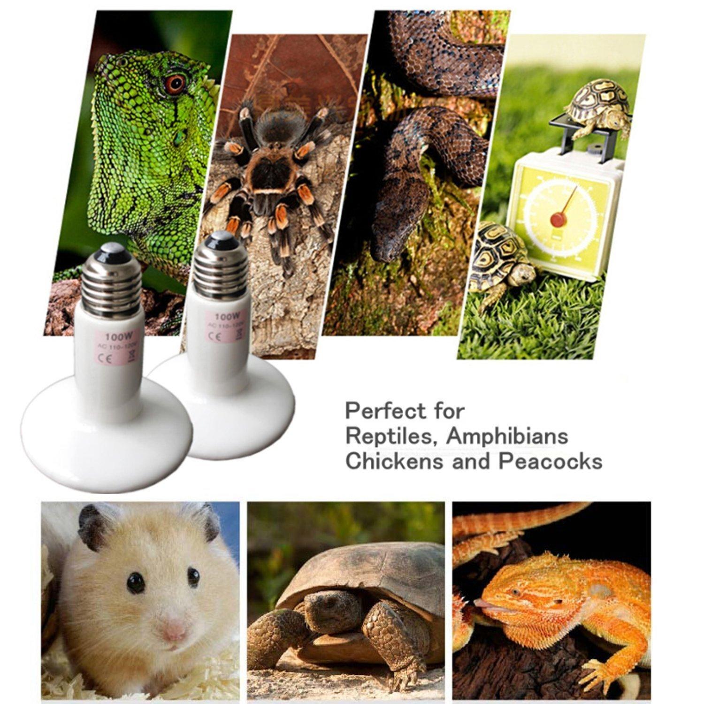Ceramic Heat Emitter Tortoise reversadermcreamcom : 815 RazQUGLSL1500 from reversadermcream.com size 1500 x 1500 jpeg 340kB