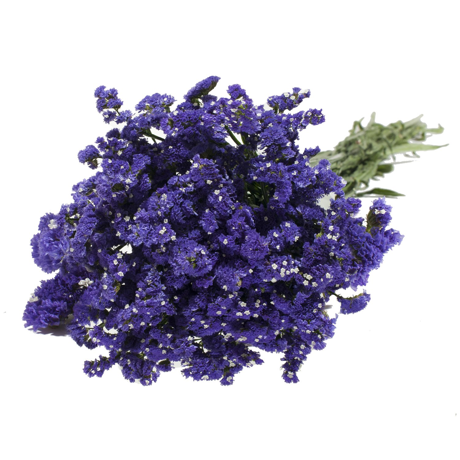 Farm Fresh Statice Natural Purple - 150 stems
