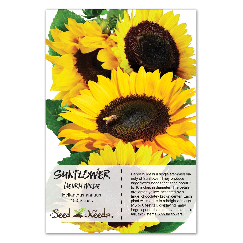 Amazon Package 100 Seeds Henry Wilde Sunflower Helianthus