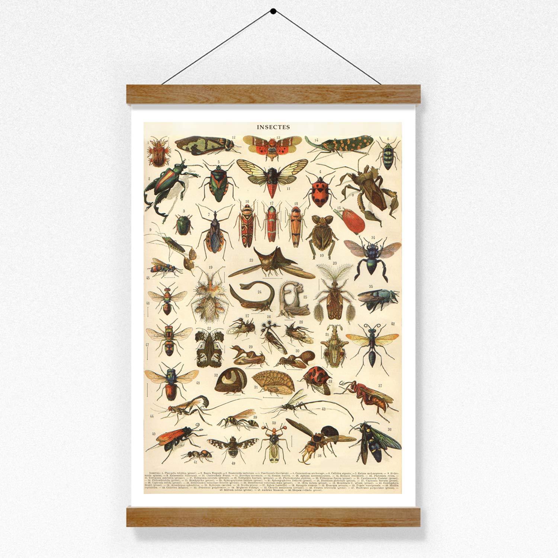 Poster Bild Insekten K/äfer Nr.3 Vintage A3 ohne Rahmen