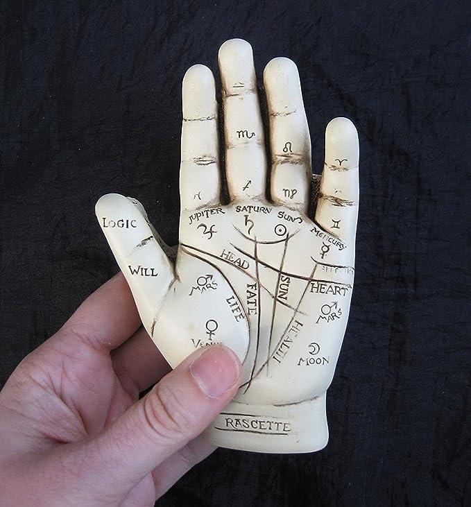 polirresina Nemesis Now Palmistry Chriomancy Fortune Telling Hand Figurine Figura Decorativa de Mano Blanco Talla /única