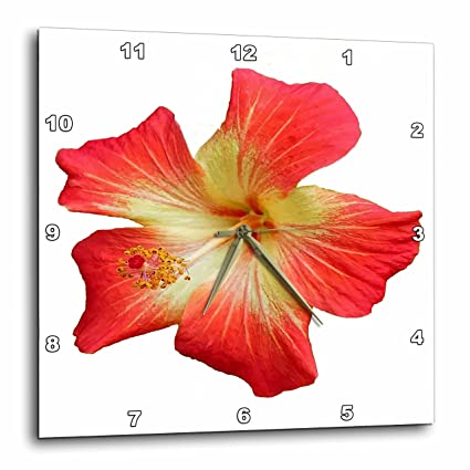 Amazoncom 3drose Gorgeous Red And Gold Hawaiian Hibiscus Flower