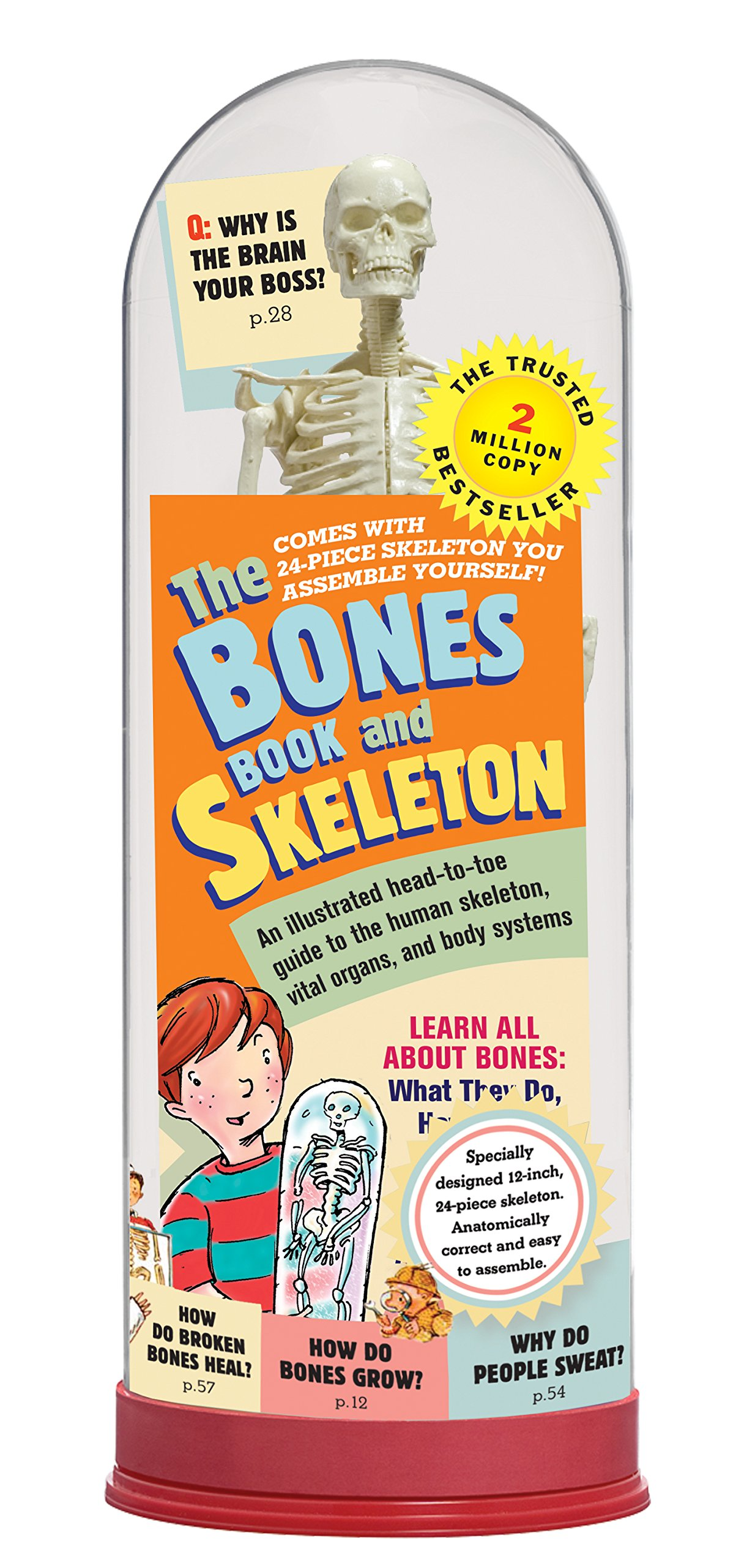 The Bones Book and Skeleton  Stephen Cumbaa  9780761142188  Amazon ... 207d0c6b8c2