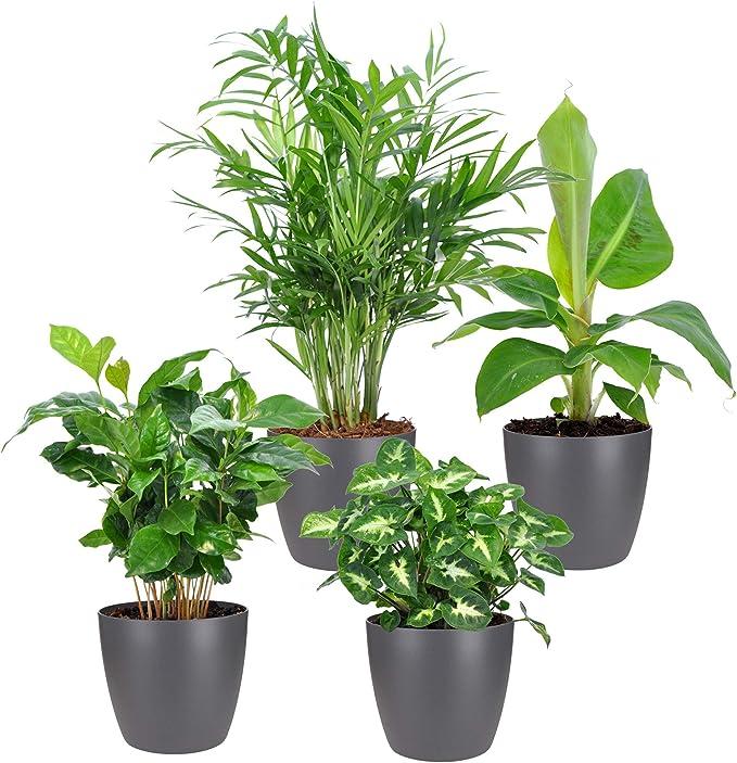 4er Set Tropische Zimmerpflanzen