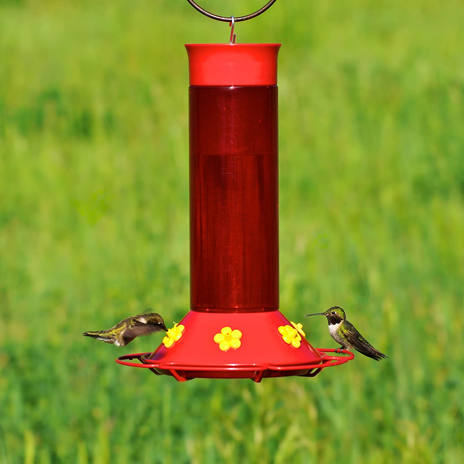 oasis dp com amazon feeder outdoor perky hummingbird garden feeders humingbird bird pet ounce