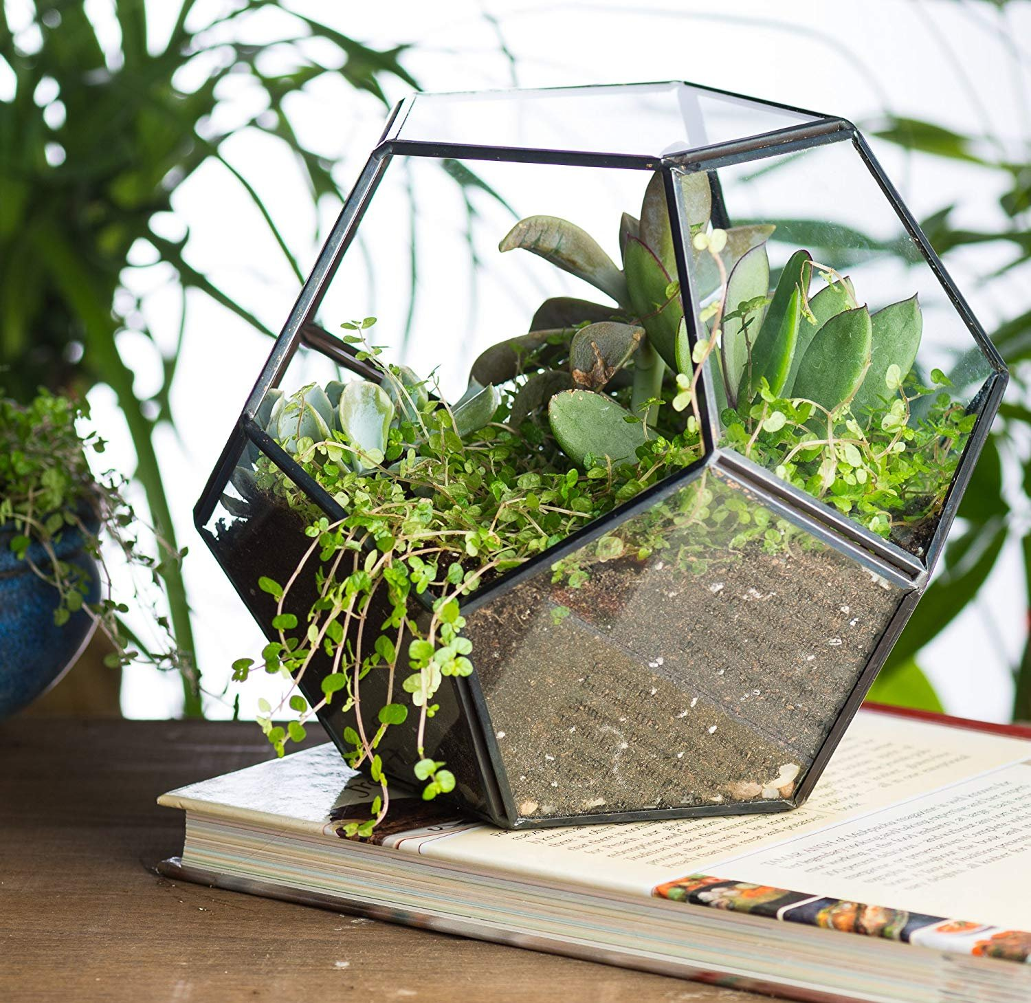 Geometric Terrarium,Elitlife Modern Tabletop Indoor Plant DIY Glass Prism Terrarium Tea Light Candle Holder Display Box for Succulent Fern Moss Air Plants Miniature Fairy Garden Gift for Mother's Day