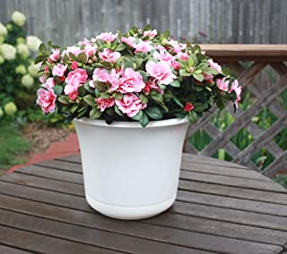 product image for Bloem EP1010 Expressions Planter, 10 White