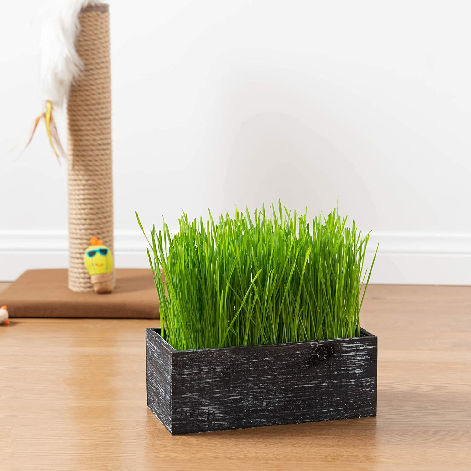 Organic Easy to Grow - Seed and Soil Dogs and Other Pets Prevent Hairballs and Aid Digestion Complete with Rustic Wood Planter Great for Indoor or Outdoor Cat Black Cat Grass Kit