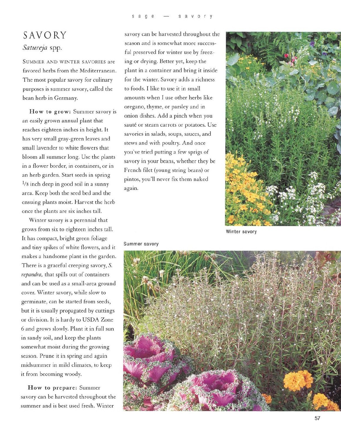 the edible herb garden edible garden series rosalind creasy