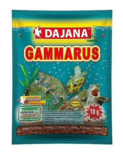 Dajana Shrimp - Gambas desecadas para tortugas acuáticas, peces de ...