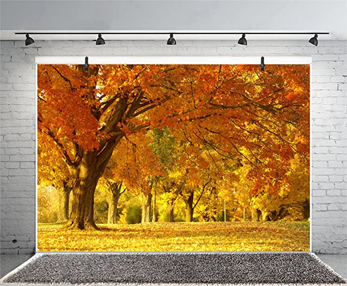 8x8FT Vinyl Photography Backdrop,Tree,Serenity in Fall Park Background for Selfie Birthday Party Pictures Photo Booth Shoot