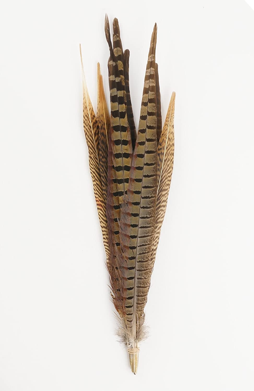 How to clean pheasant feathers - Amazon Com Zucker Feather Products Assorted Natural Pheasant Tails Feathers 14 To18 Inch Home Kitchen