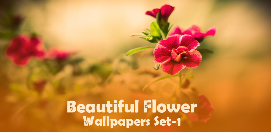 Beautiful flower wallpapers appstore for android - Flower wallpaper dp ...