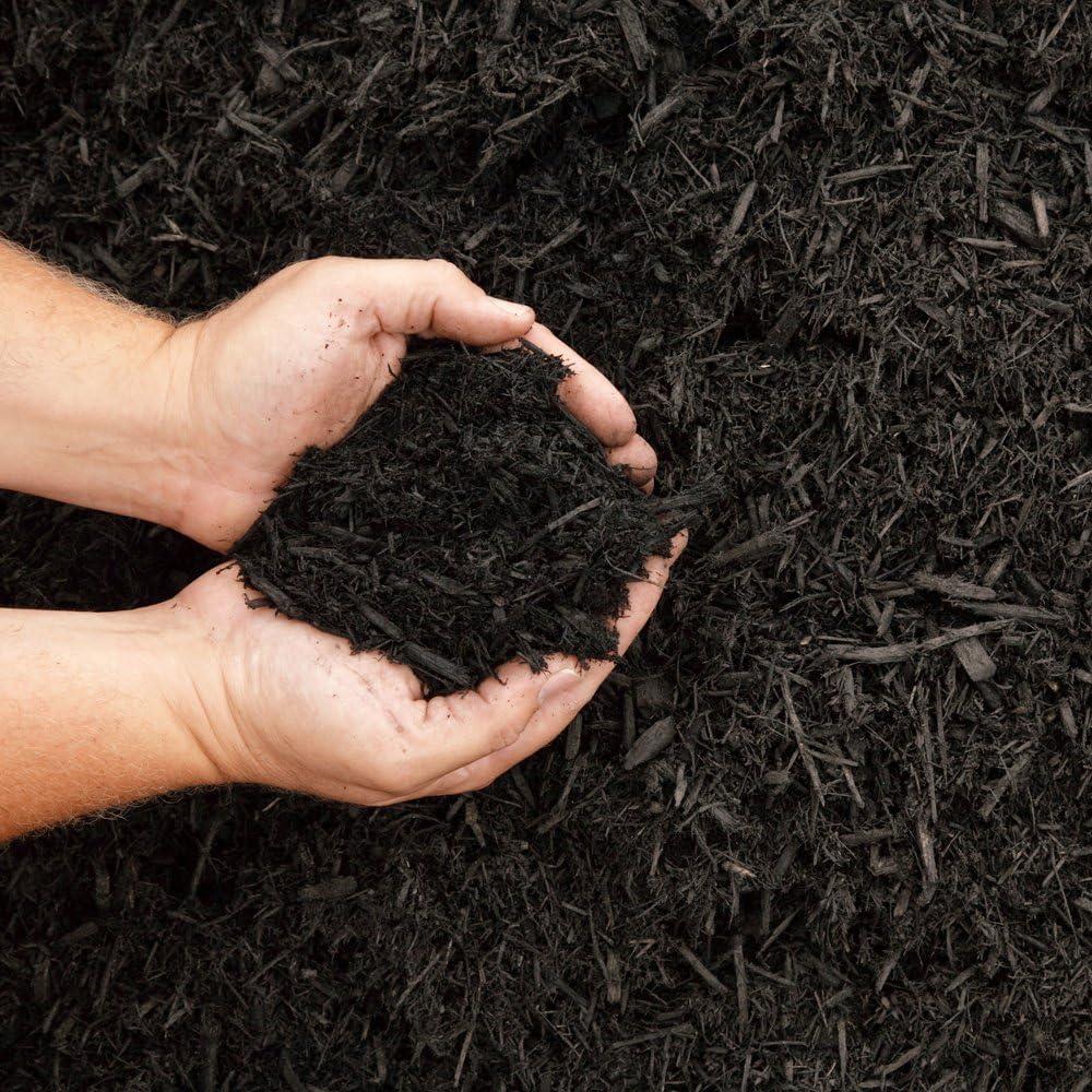 Dandy del mpocjbb orgánico Multiusos Compost – Negro: Amazon.es ...