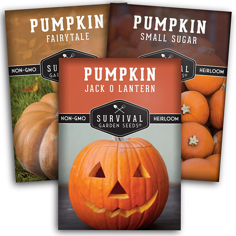 Survival Garden Seeds Pumpkin Collection Seed Vault - Non-GMO Heirloom Seeds for Planting Vegetables - Fairy Tale, Jack O Lantern, Small Sugar Pumpkins