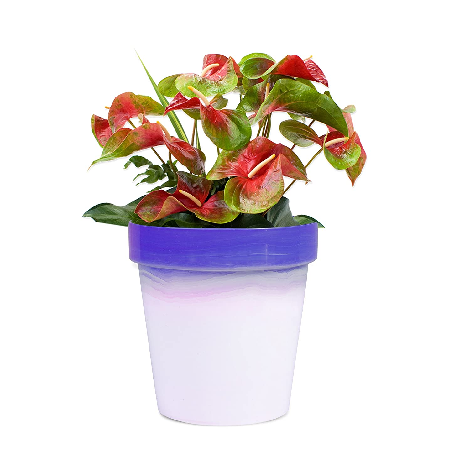 Sharpex Traditional Type Flower Pot (Violet)