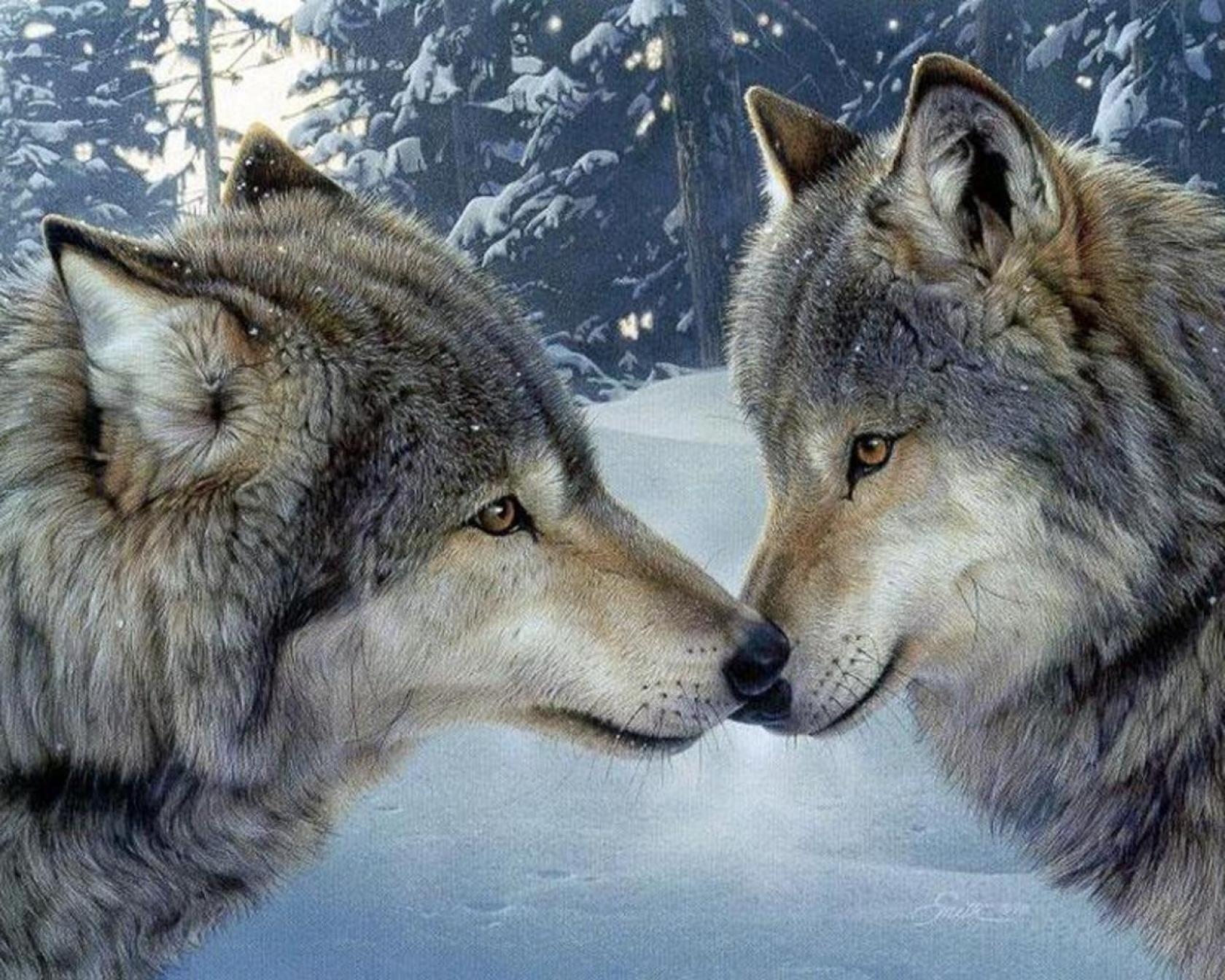 5D Pintura por Diamantes (4933) Lobos