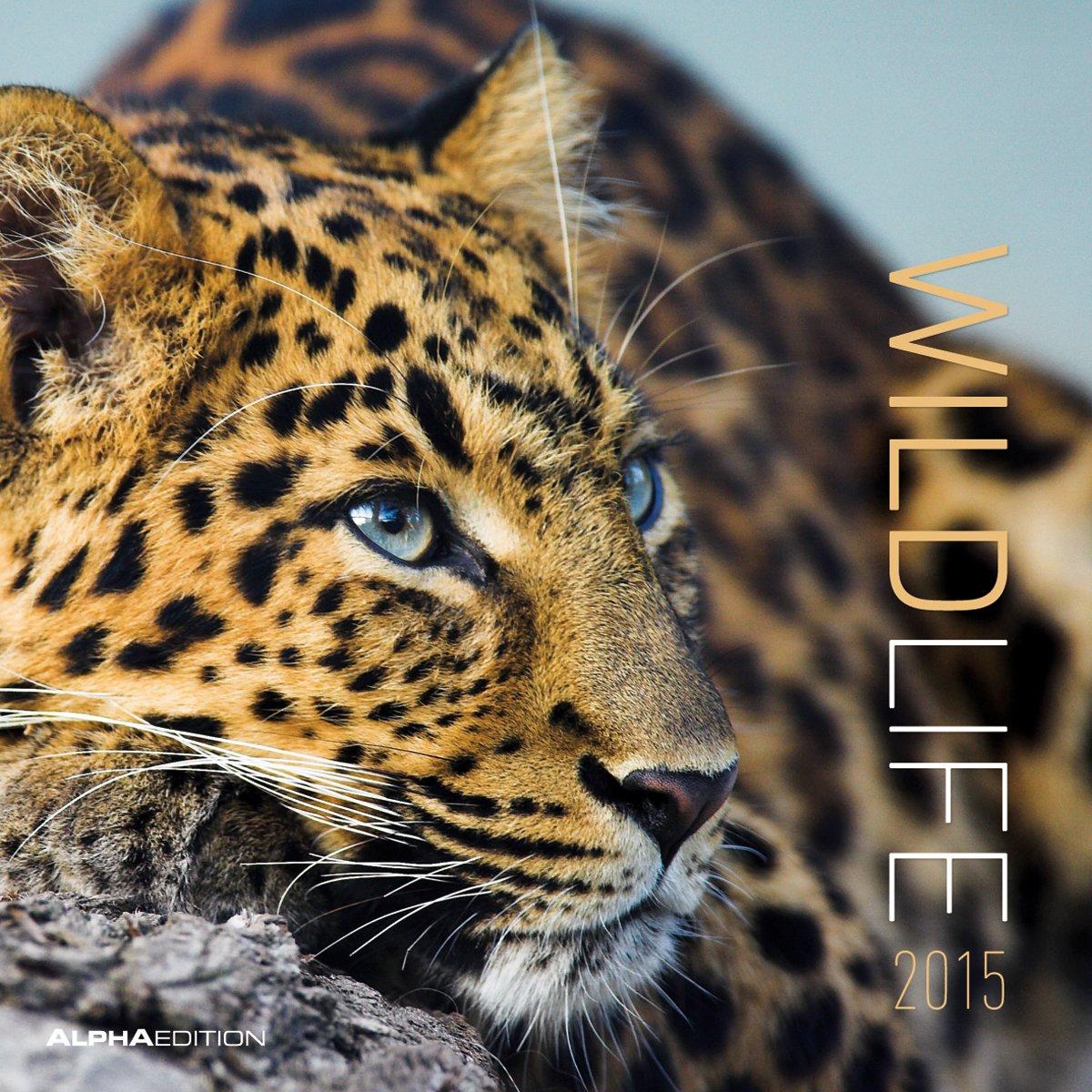 Wildlife 2015 - Broschürenkalender (30 x 60 geöffnet) - Tierkalender