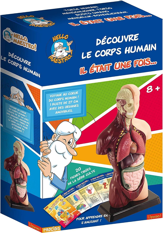 Modelo anatómico cuerpo humano para niños