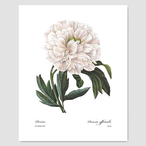 Amazon Peony Art Botanical Print White Flower Wall Decor