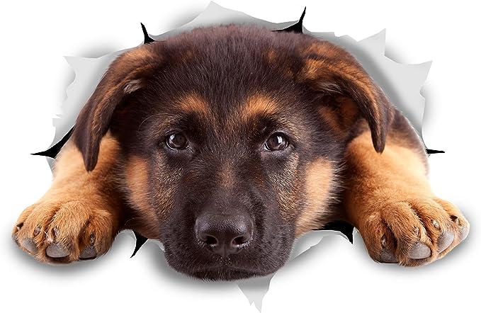 Schutzhund L792 8 inch Sticker dog german shepherd Decal