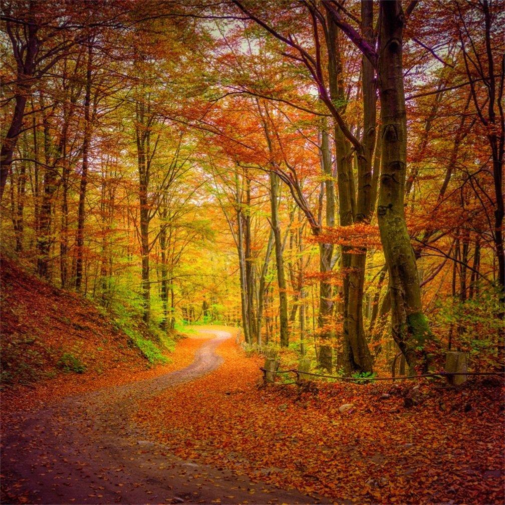 日本未発売 落ち葉 道路 背景 写真 風景 秋の森 背景 4x4フィート