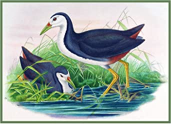 Orenco Originals Green Magpie Naturalist Gould Birds Counted Cross Stitch Pattern
