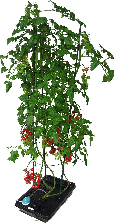 水畑 つるまき支柱付き トマト、ミニトマト、ナス、さやいんげんなど丈の必要な野菜を水耕栽培 B00CRBZ31Q