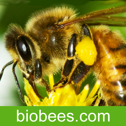 BioBees - The Barefoot Beekeper Podcast App