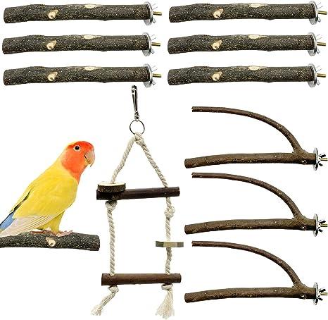 S01 Parrot Budgie Pet Bird Perch Stick On Perch With Acrylic Plate Amuzocity Bird Perch