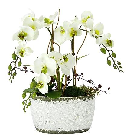 Flair Flower 088837WGN Phalaenopsis in Schale, Polyester, Kunststoff, Keramik, Weiß/Grün, 16 x 45 x 57 cm