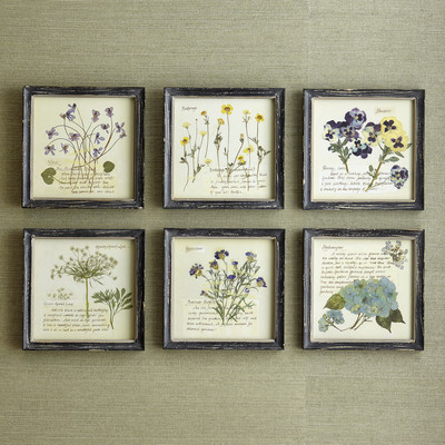 Birch Lane Pressed Flowers Wall Art & Reviews | Wayfair