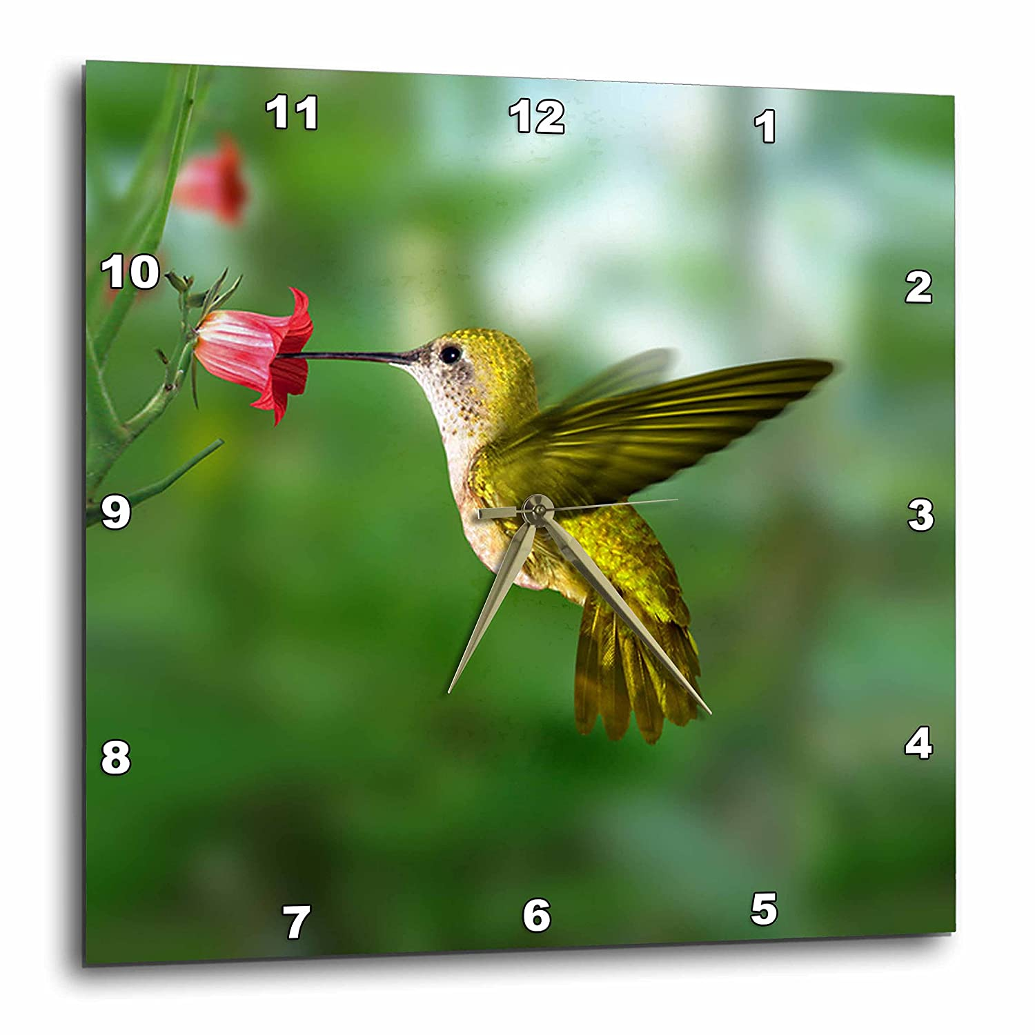 3dRose DPP_4143_3 Hummingbird Wall Clock, 15 x 15