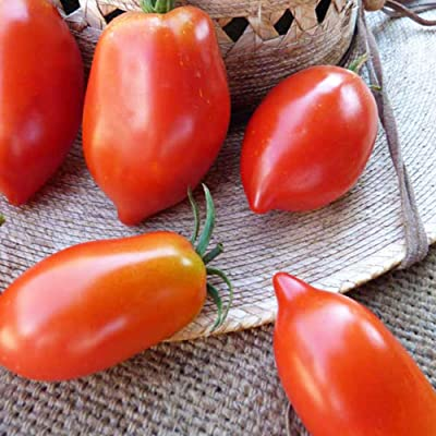 Organic Amish Paste Tomato Seeds ~25 Seeds - Organic, Heirloom, Open Pollinated, Non-GMO, Farm & Vegetable Gardening Seeds: Garden & Outdoor