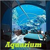 Aquarium Screensavers