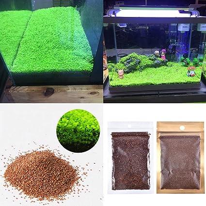 Aquarium Plants Seeds Aquatic Double Leaf Carpet Water Grass, For Fish Tank  Rock Lawn Garden