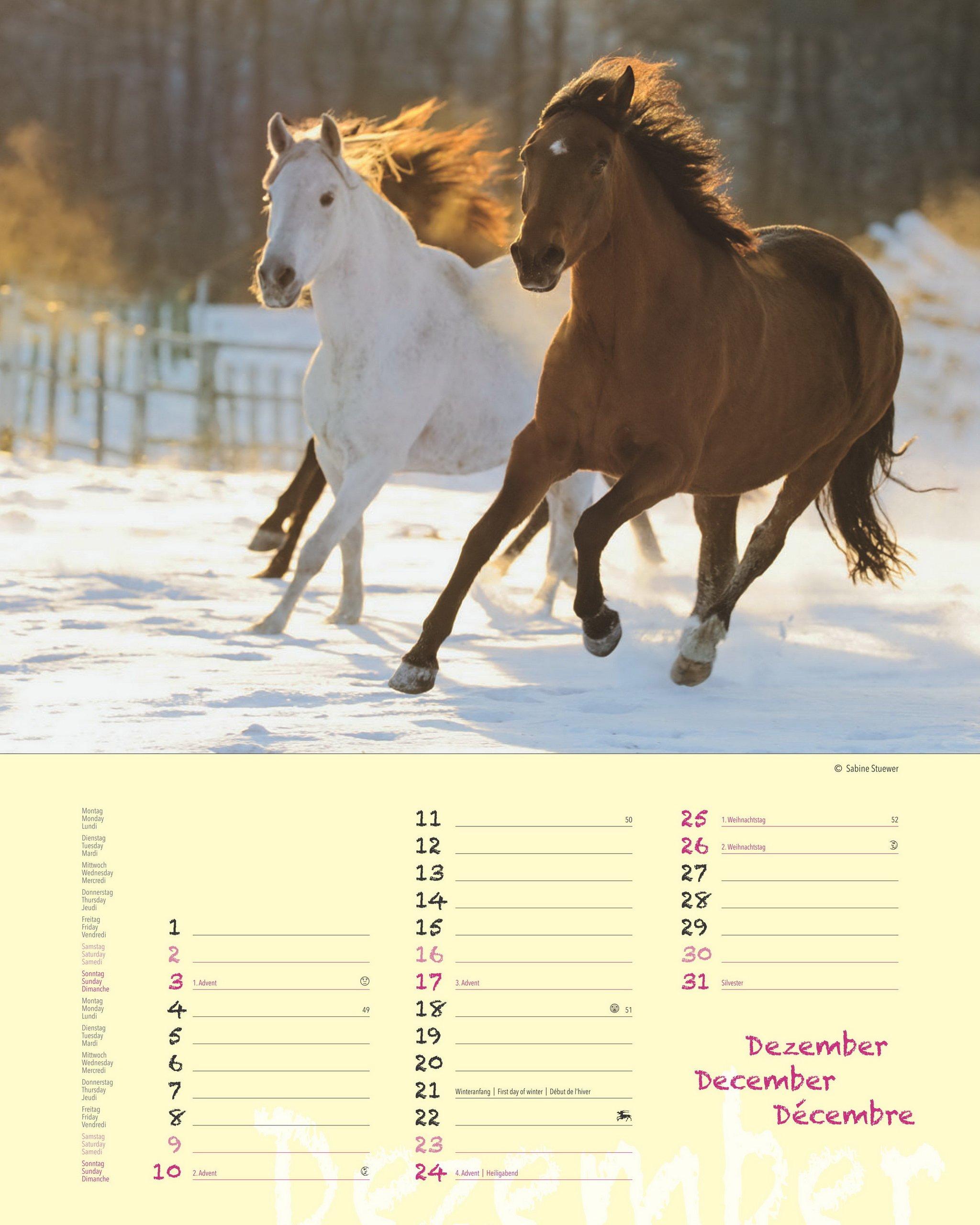 PFERDETRÄUME - Original Stürtz-Kalender 2017 - Hochformat-Kalender 36 x 45  cm mit Platz für Notizen Kalender-Hochformat: Amazon.de: Sabine Stuewer:  Bücher