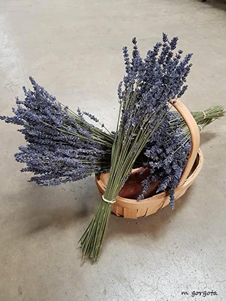 Natural Dried French Provence Fragrant Lavender Bunch Tied by Hand,..